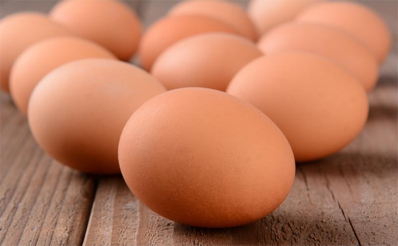 Türkiye ve dünya yumurta sektörü üzerine